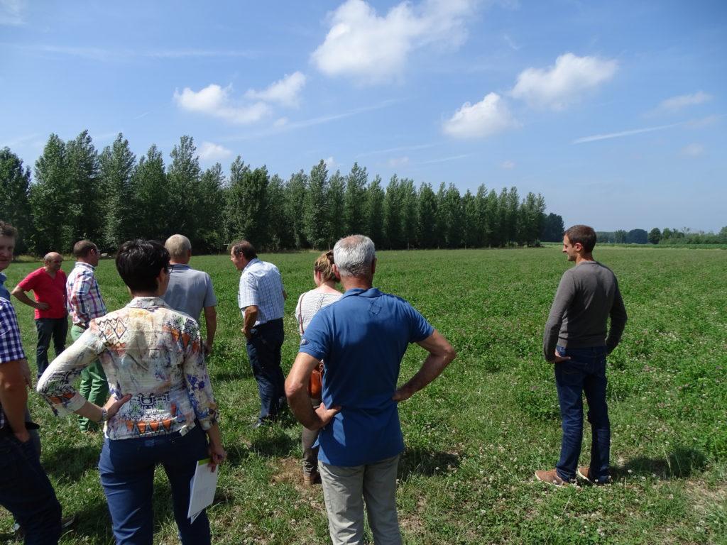 Veldbezoek grasklaver en rietzwenkgras
