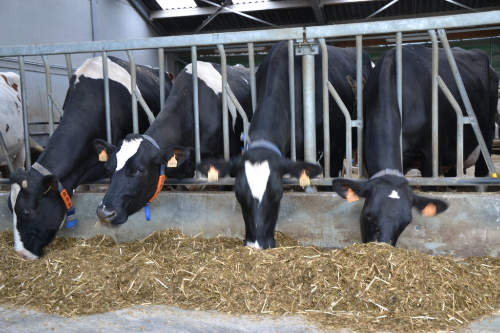Meer weten over klimaat en melkveerantsoenen