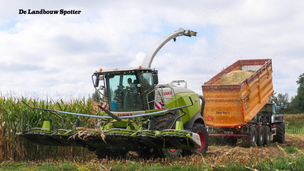 Afrijping maïs ging in 2020 (te) snel